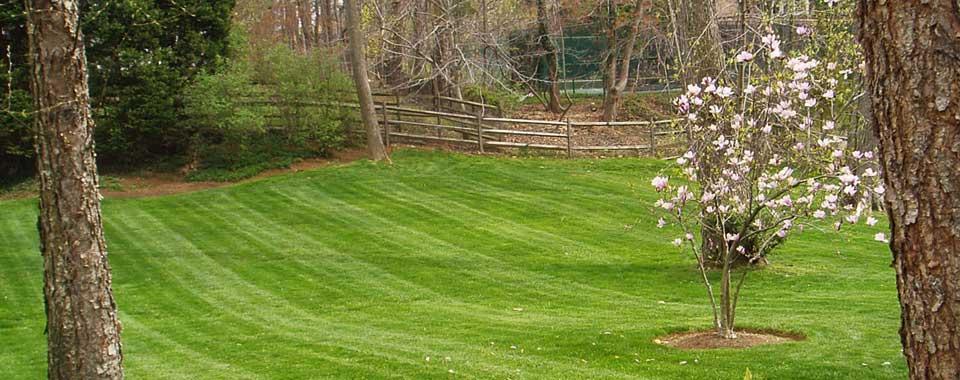 image of a back yard